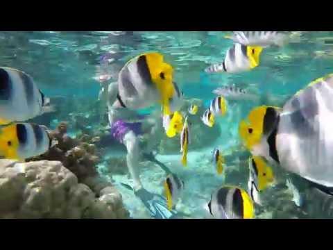 Raiatea, Tahaa. Jardin de corail - Te Mara Nui Plongée
