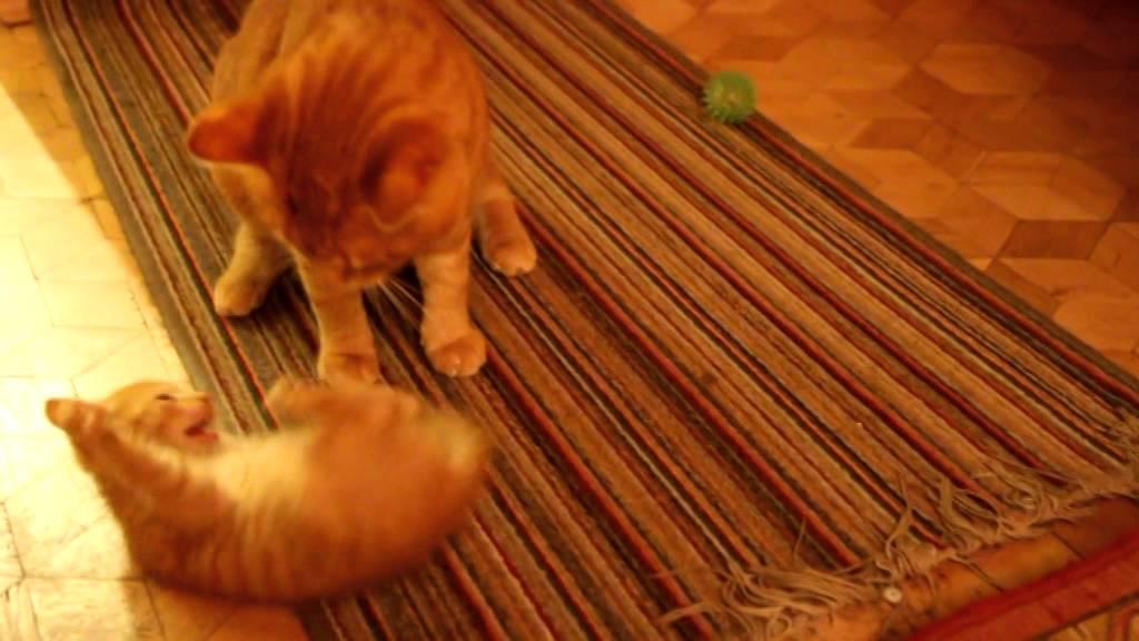 Mały Rudy Kot Duży Rudy Kot