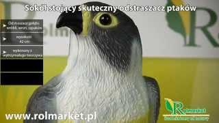 Odstraszacz ptaków. Skuteczny! Jak odstraszyć ptaki? www.rolmarket.pl