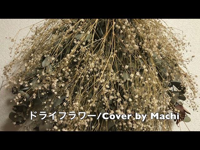 #58 ドライフラワー/Cover by Machi/歌ってみた/優里