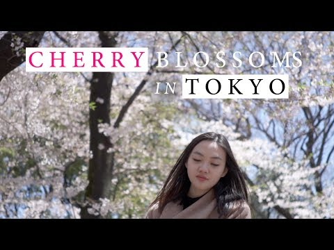 Dreamy spring: Cherry Blossoms in Tokyo   Travel With My Dear   Tokyo Vlog