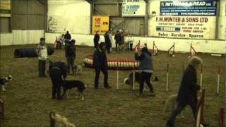 Novice Agility Isle Of Wight Dog Training Society 10/01/2011