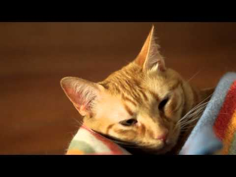 The Cat - an Essay in DSLR video