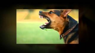 Healthy Dog, Healthy Home - Dog Obedience Training