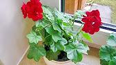 Умные кашпо с автополивом! Цветы не нужно поливать до 12 недель .