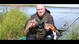 Крупный окунь на поплавок с живцом Щука на кружки Еле добрались до озера