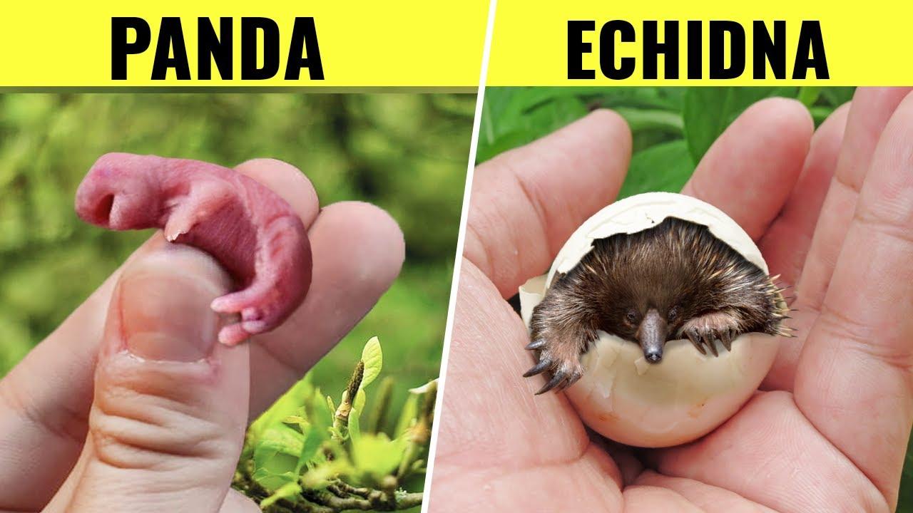 10 Cutest Newborn Baby Animals!