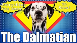 All About The Dalmatian   What You Need To Know About This Dog Breed.