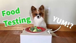 Dog's Reaction to Human Food (Funny) // Percy the Papillon Dog