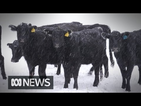 Town Cut Off, Motorists Stranded As Snow Blankets Parts Of Inland Australia   ABC News