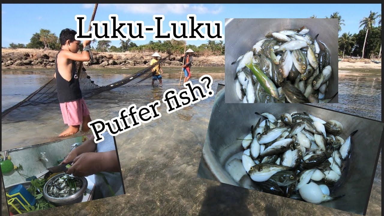 Download How to Catch Puffer Fish(Luku-Luku)local name.cook and eat it!