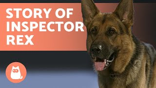 The story of INSPECTOR REX, the Most Famous POLICE DOG in Europe 🐕👮♂️
