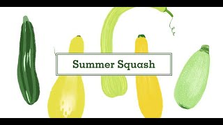 16 Types of Squash - Different Types of Summer and Winter Squash