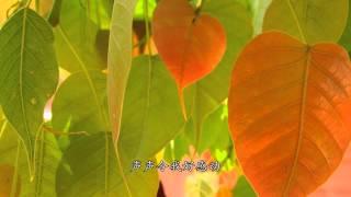 菩提之歌 兒童佛曲 中文字幕