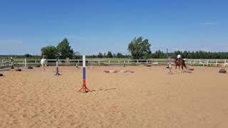 Обучение верховой езде. Рысь. Эстафета. Первые этапы подготовки к детскому конному челленджу