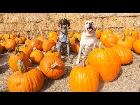 Dog Vlog// HALLOWEEN Pumpkin Patch