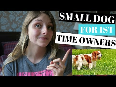 BEST SMALL DOG BREEDS FOR FIRST TIME OWNERS - 5 BREEDS