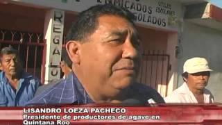 Se manifiestan productores de Agave del municipio de Felipe Carrillo Puerto