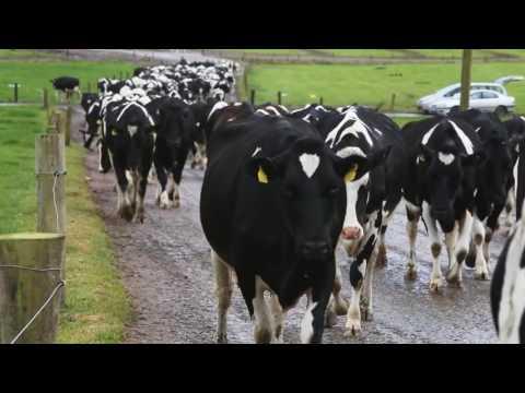 My Farming Week: Tom and Simon Browne, Killeagh, Co. Cork