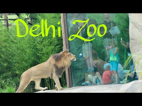 A Vlog in Delhi Zoo (Sarcastic Boys) Zoological Park