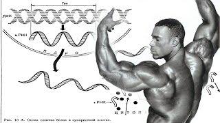 видео Для чего нужны аминокислоты при тренировках?