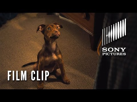 "A DOG'S WAY HOME Clip - ""It was Love"" (In Theaters Tomorrow)"