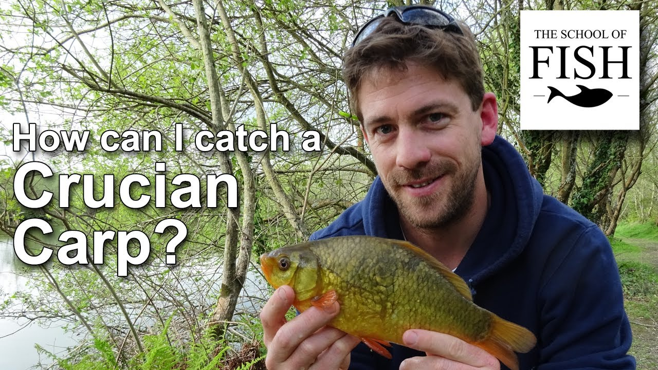 How to catch crucians