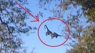 بالفيديو: فهد يظهر مقدرة عالية على القفز أثناء مطاردته لسنجاب