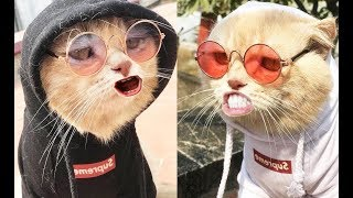 Funny Animals - Funny Cats and Dogs Vines Moments Compilation 2019 #9