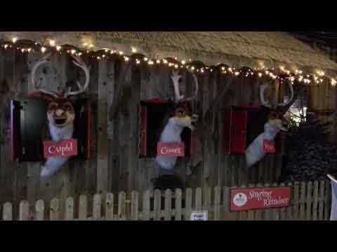 Reindeers singing at Brigg Garden centre