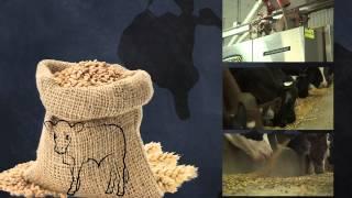 L'alimentation du veau du Québec