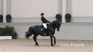 Grey Flanell Hengstkollektion Englisch 2019