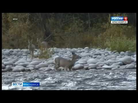 В Красноярском крае возобновили выдачу охотничьих билетов