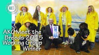 Newfoundlands Win Best Working Group Booth At 2015 Akc Meet The Breeds