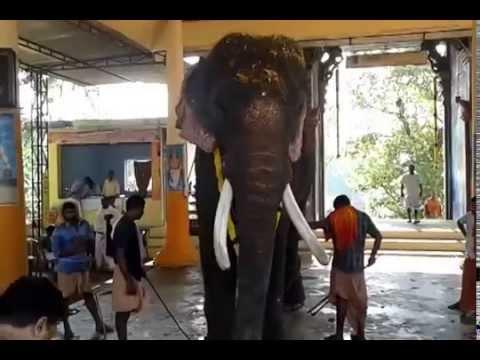 thrikkadavoor sivaraju in kalanjoor mahadeva temple 2