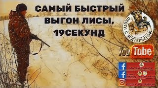 Охота с ягдтерьером, выход лисы через 19 секунд