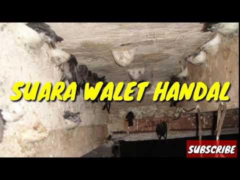 DOWNLOAD GRATIS!!!  SUARA PANGGIL WALET HANDAL