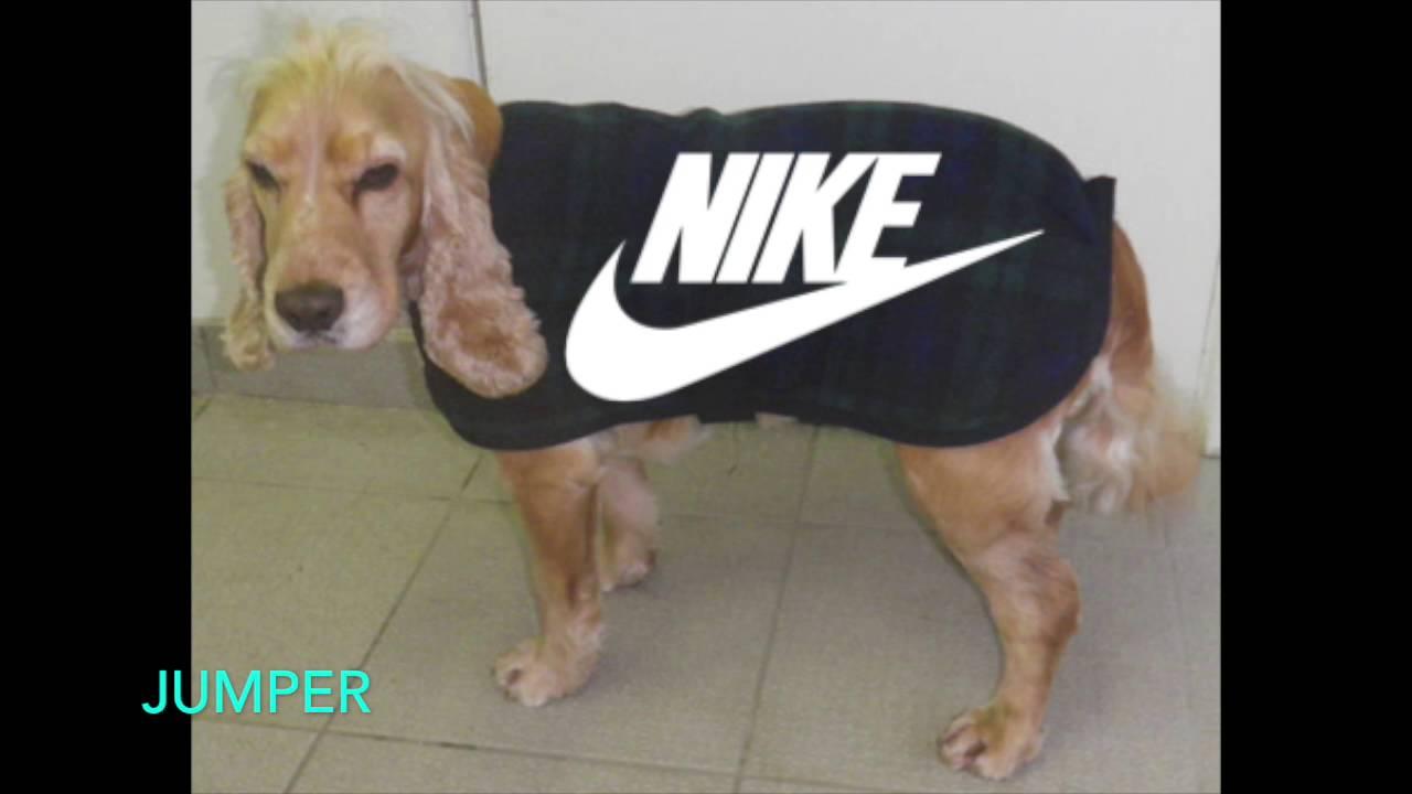 3323hsl Nike Dog Wear Viral Video