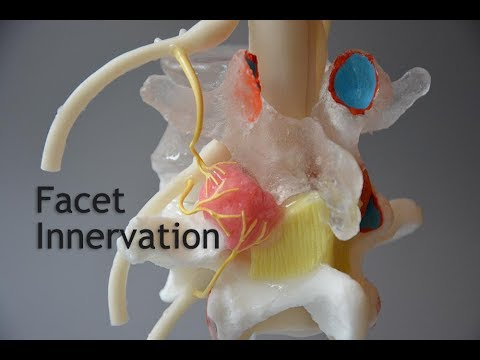 Facet Joint Pain - Medial Branches - Compression and Shear Loads