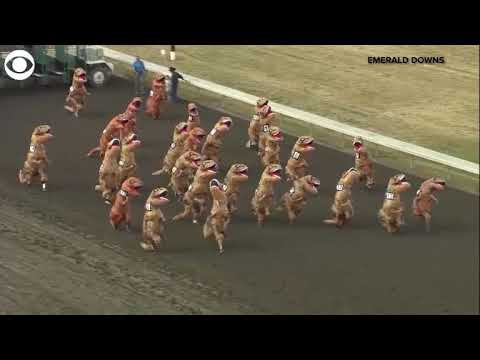 Bodhi - People Wearing T-Rex Costumes Had A Race (Video)