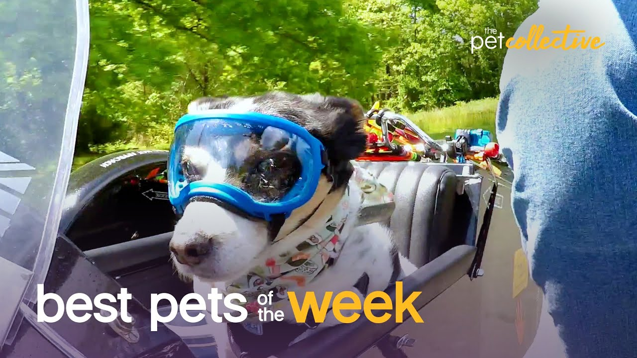 King of the Road | Best Pets of the Week