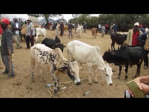 Purchasing livestock at the Thursday market for AIDS orphans