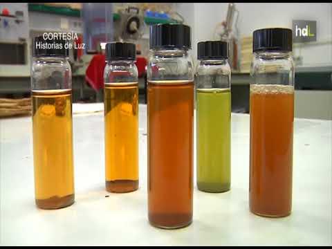 papel a partir de celulosas de algas marinas