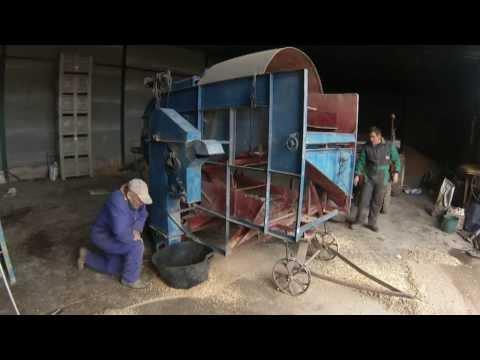 Antigua aventadora limpiando trigo