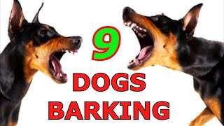 Dogs Barking, Whining & Howling     Prank Your Dog , 9 Dogs Barking, Dogs on Zoom ! ,