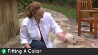 How To Install Your Radial-shape Havahart® Wireless Dog Fence