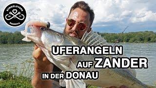 Vom Ufer aus auf Zander 🎣❤️ in der Donau #strklvrs