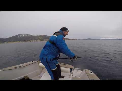 Cod fishing Aalesund Norway