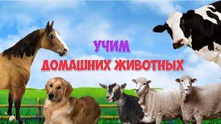 Учим домашних животных | Смотреть мультики | Для самых маленьких