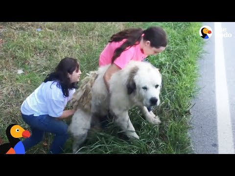 Family Adopts Sweetest Dog Found On Side of the Road | The Dodo